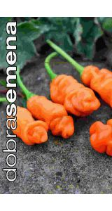 PETER´S PEPPER ORANGE - 10 ks
