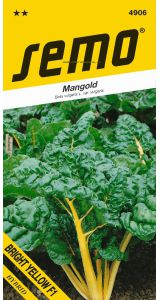 MANGOLD BRIGHT YELLOW F1 - 3 g