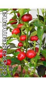 TRINIDAD HOT CHERRY - 15 ks