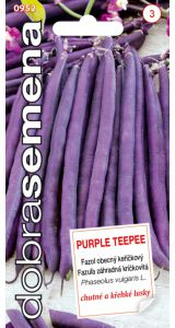 PURPLE TEEPEE - 10 G