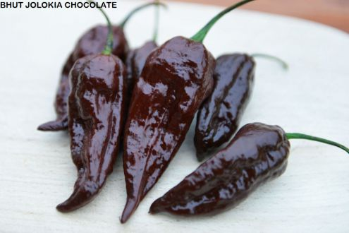BHUT JOLOKIA CHOCOLATE