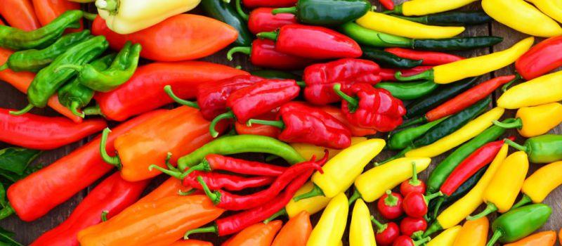 Jak uspět s pěstováním paprik